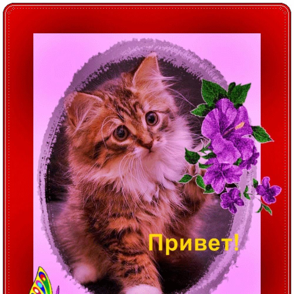 Открытки с котиком и приветом