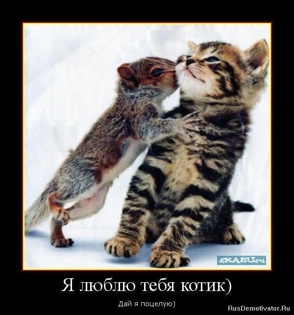 картинка я люблю тебя мой котик
