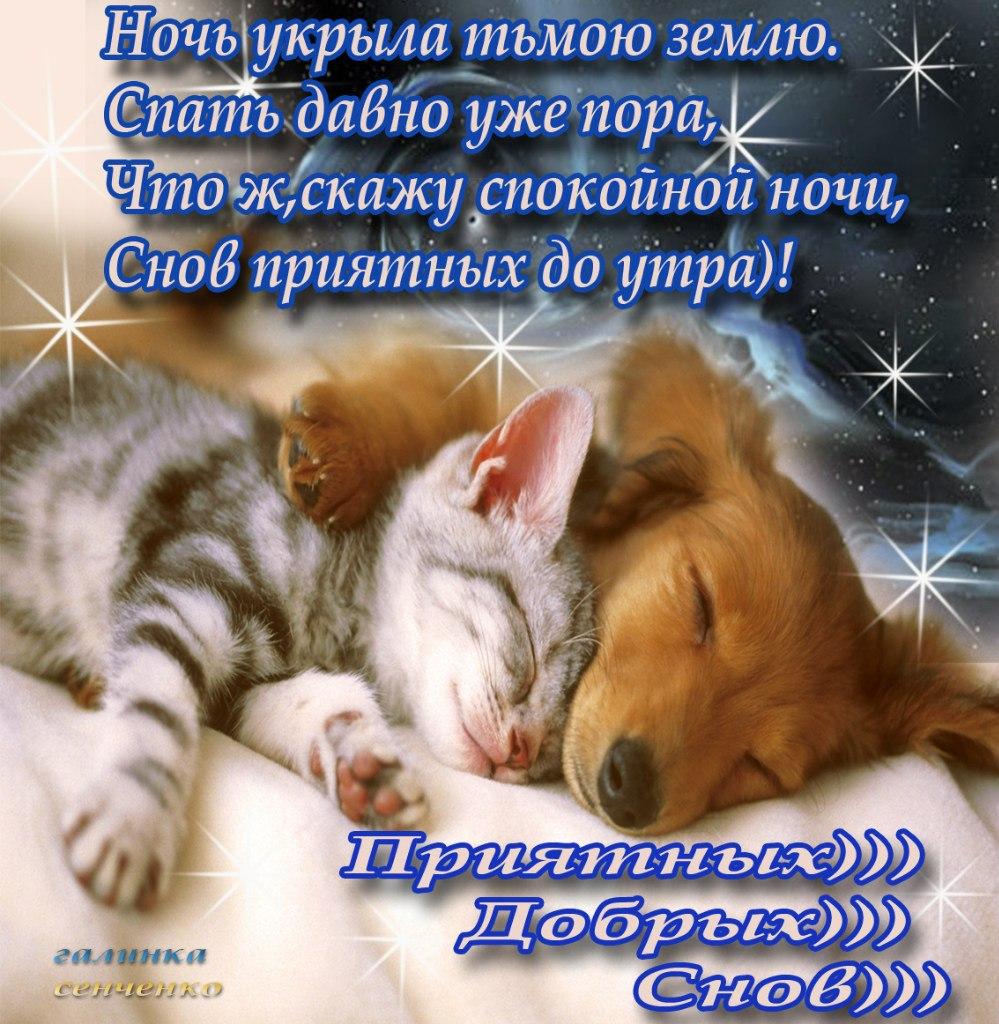 Красивое пожелание спокойной ночи открытка